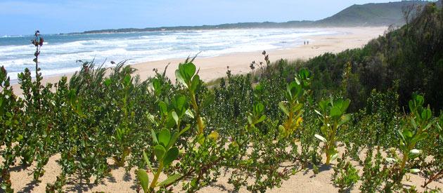 Afbeeldingsresultaat voor oyster bed south africa
